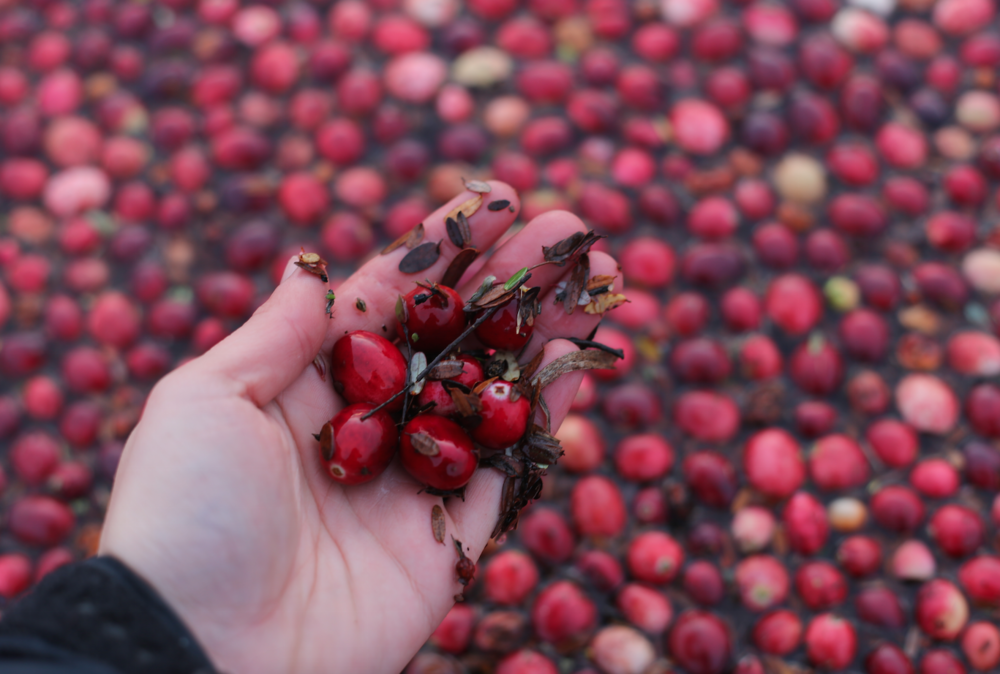 The Protective Effects of Cranberry