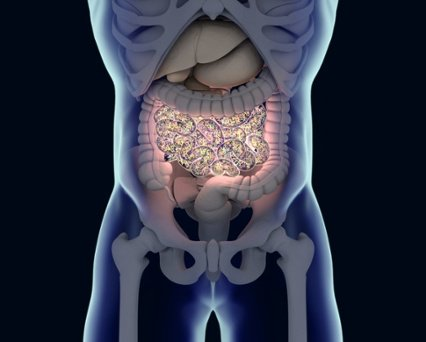 Gut Microflora May Influence Obesity