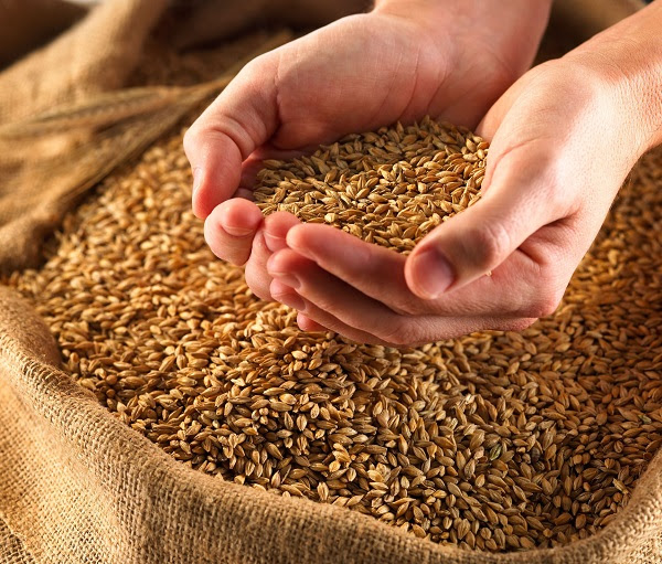 Cooking Matters: Whole Grains, Beans, and Lentils